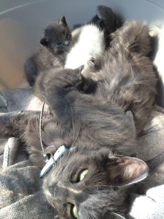 Compra cats breeds y disfruta del envío gratuito en ...
