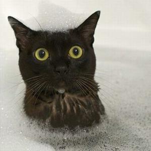 Cuidados de los gatos - Banar gatos ...