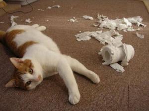Gatos con comportamiento destructivo