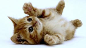 ¿Premios o castigos para educar a nuestros gatos?
