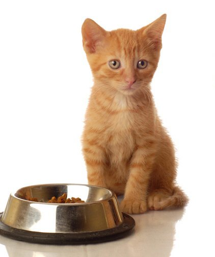 Alimentaci n en gatitos - Alimento para gatos esterilizados ...