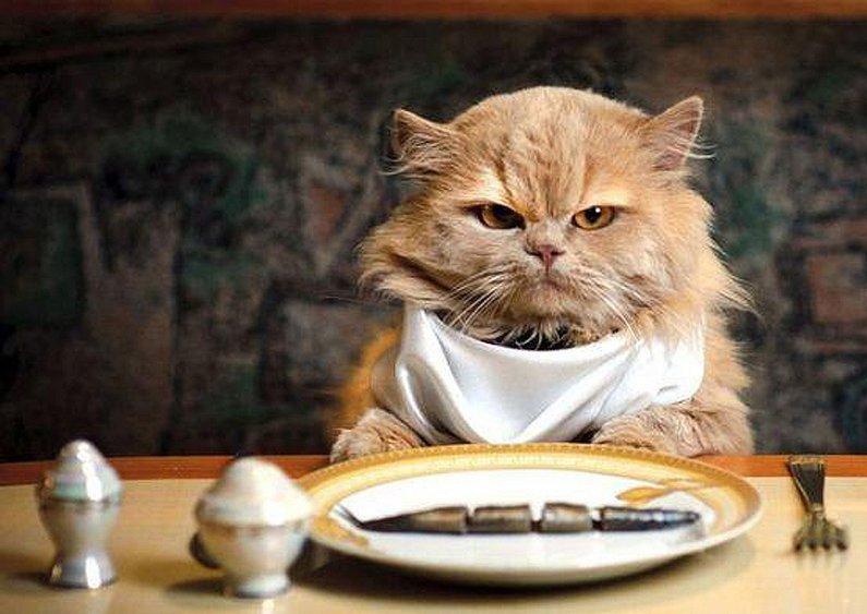 Resultado de imagen de comiendo comida de gato