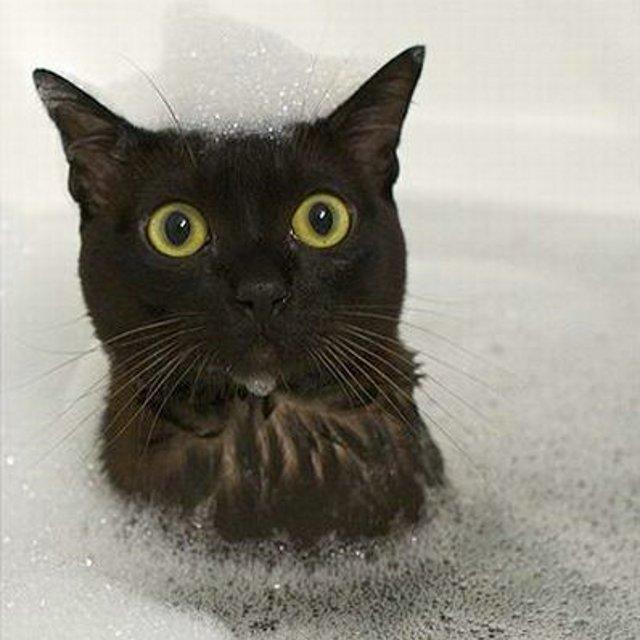 Consejos para ba ar al gato - Se puede banar en los jameos del agua ...