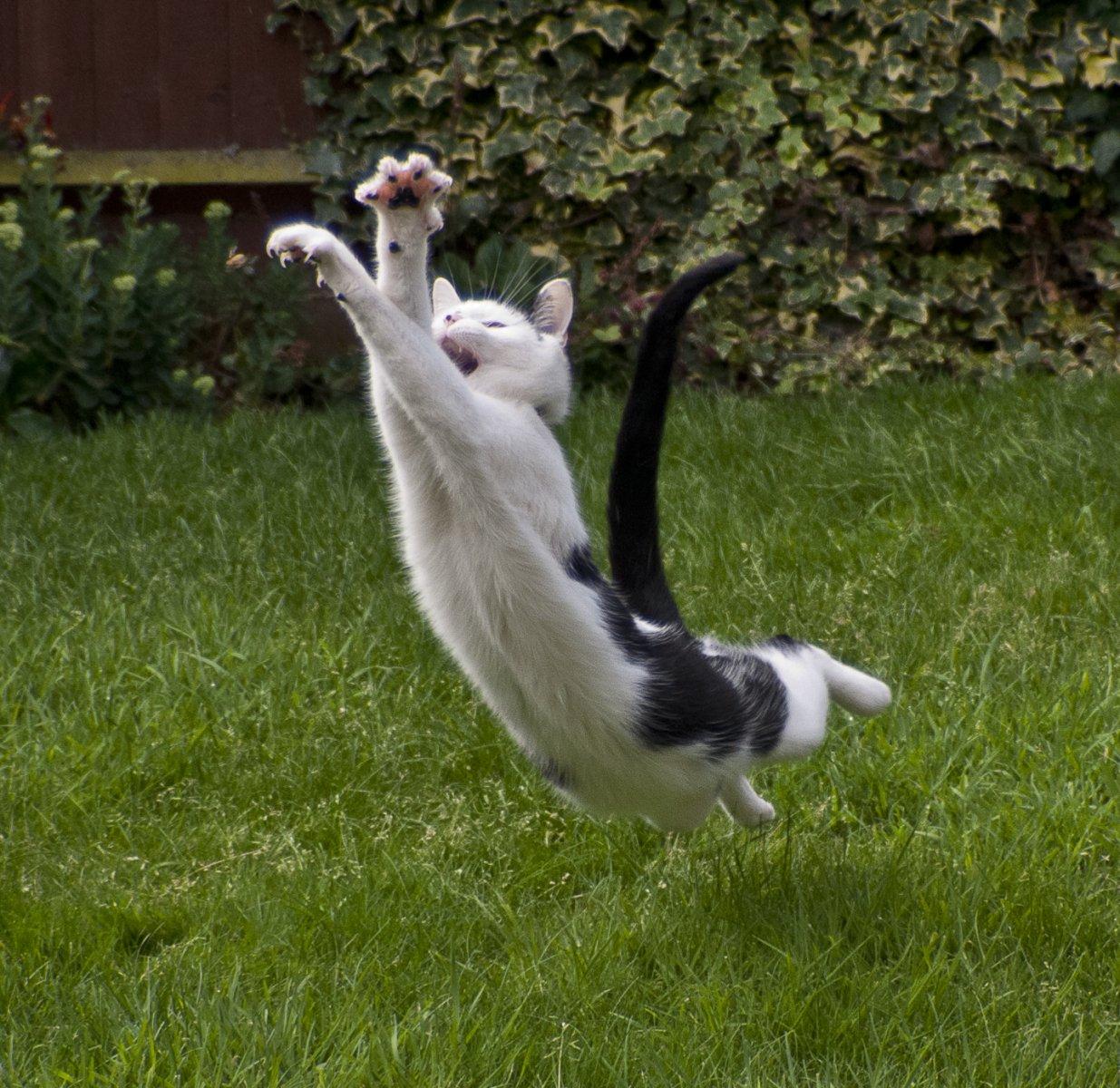 Consejos para conseguir que nuestro gato nos obedezca. MundoGatos.com