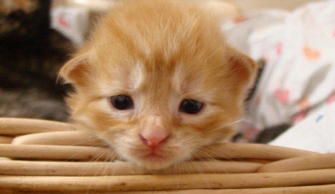 Cuidados de los gatos MundoGatoscom