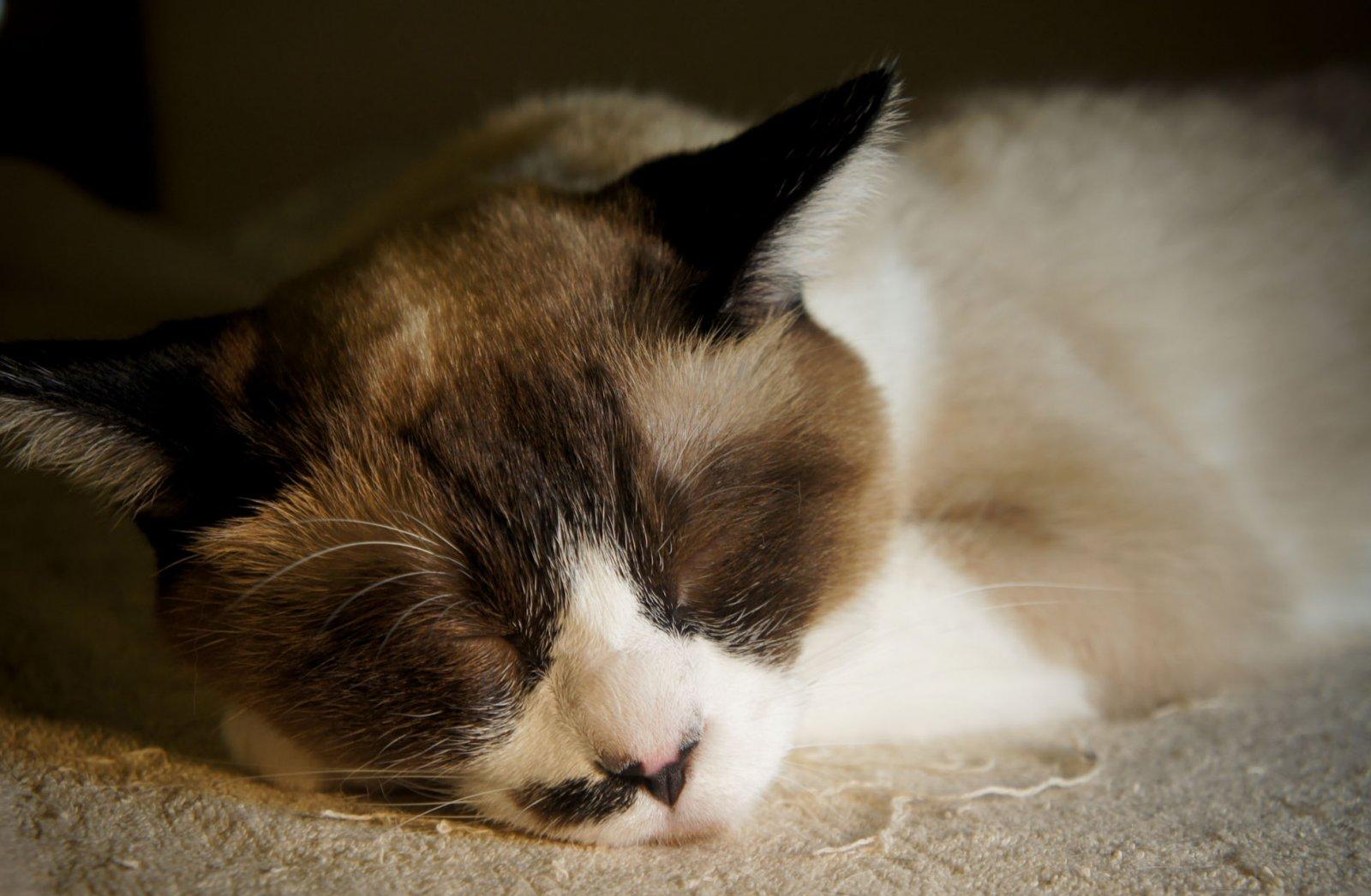 Dudas de comportamiento sobre gatos (II). MundoGatos.com
