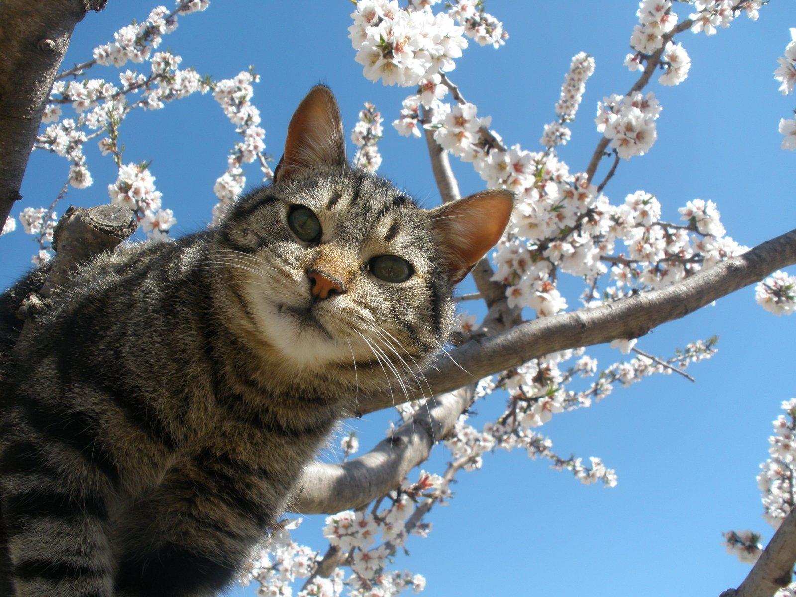 El equilibrio de los gatos. MundoGatos.com