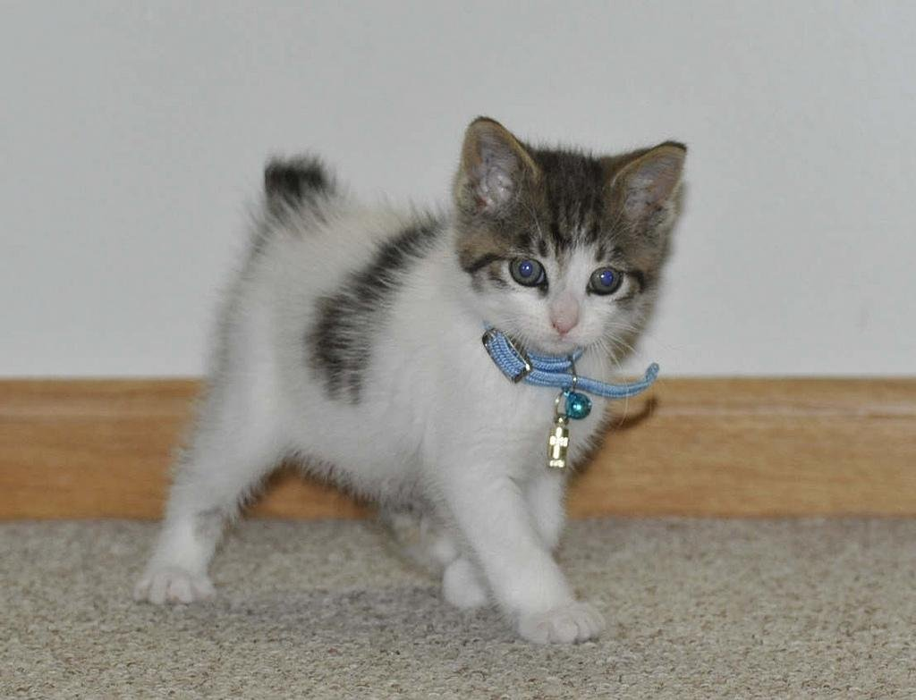 Pictures Of Baby Cats For Sale