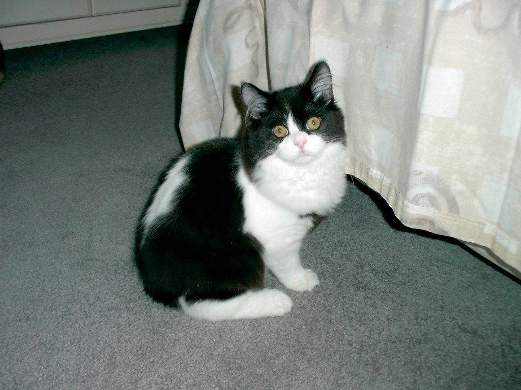 El gato gordo - 3 7