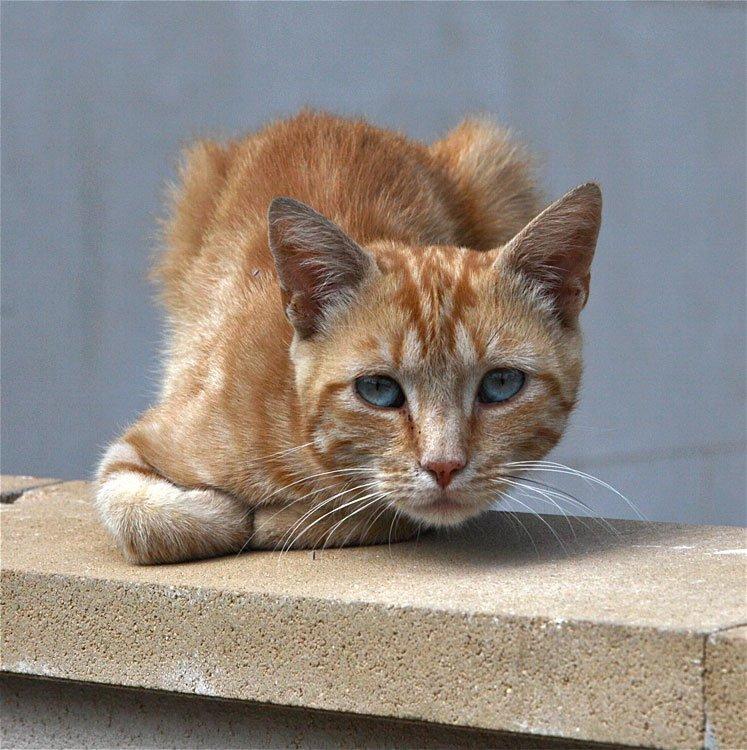 Gatos abandonados for Ahuyentar gatos de mi jardin