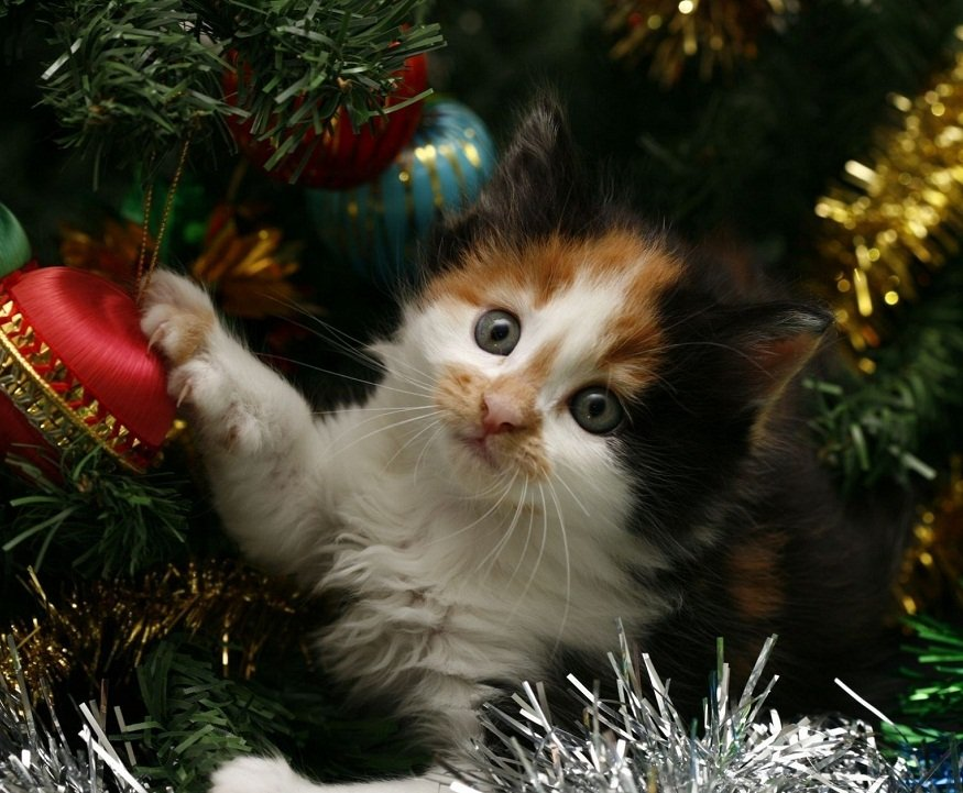 396393f8b25 Los gatos y los árboles de Navidad Muchos dueños ...