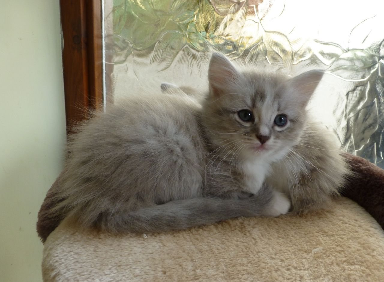 Cat El For Sale