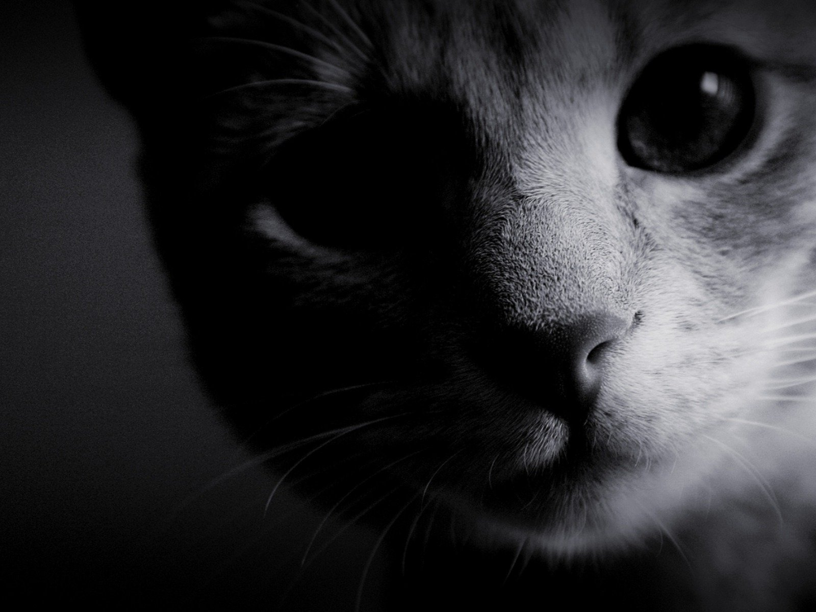 La visión de los gatos. MundoGatos.com