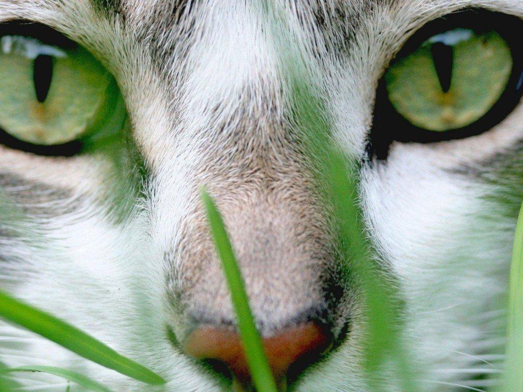 El lenguaje de los ojos de los gatos. MundoGatos.com
