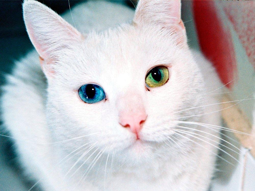Los ojos de los gatos. MundoGatos.com
