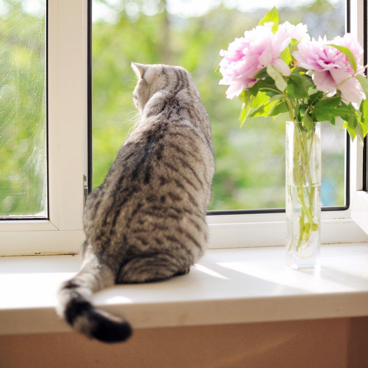 Por qué los gatos siempre caen de pie?. MundoGatos.com