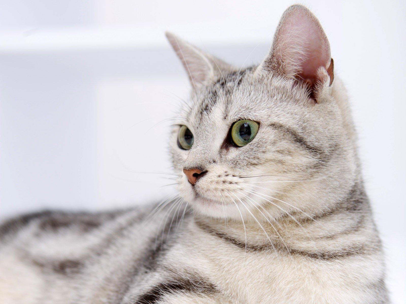 Dudas De Comportamiento Sobre Gatos Mundogatos Com