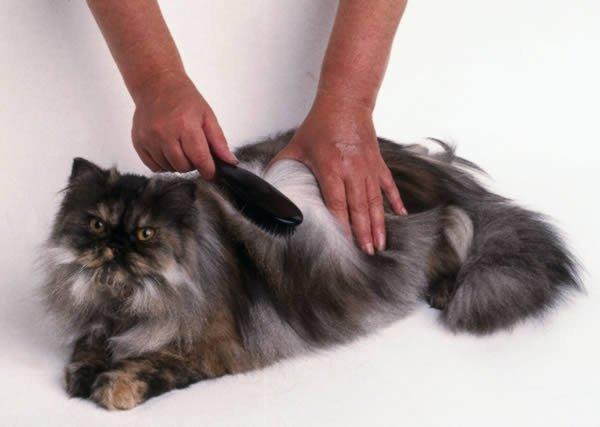 Cuidado y alimentaci n del gato i taringa - Menstruacion dos veces al mes ...