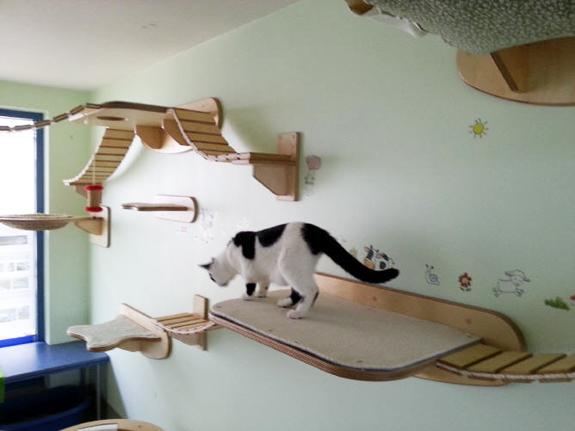 Как сделать домик для кошек фото 69