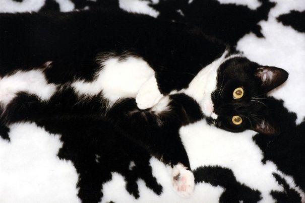 Gatos camuflados de una forma perfecta (10)
