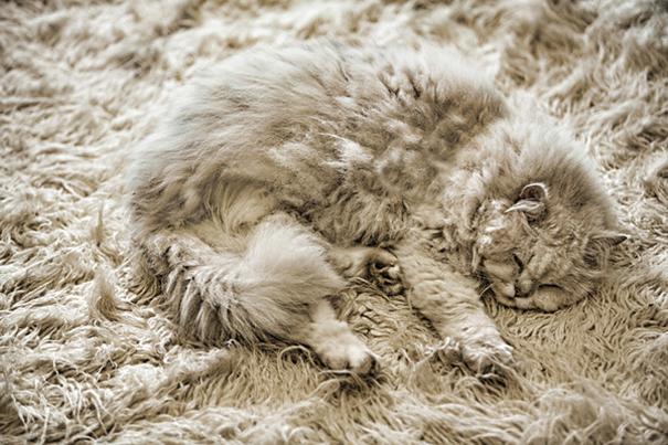 Gatos camuflados de una forma perfecta (11)