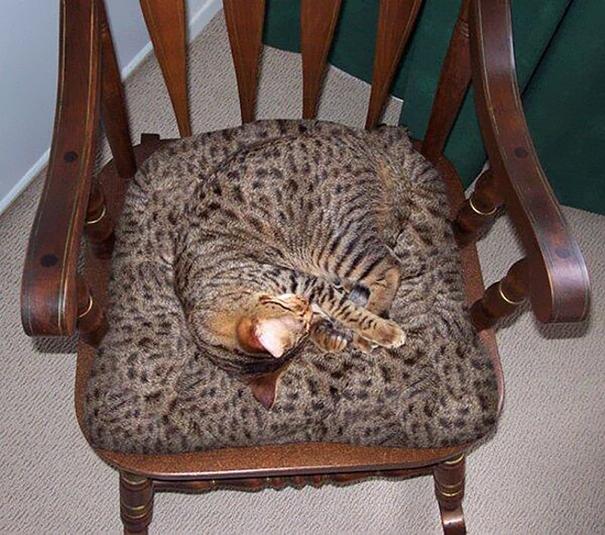 Gatos camuflados de una forma perfecta (13)