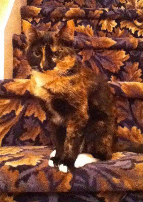 Gatos camuflados de una forma perfecta (14)