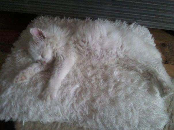 Gatos camuflados de una forma perfecta (16)