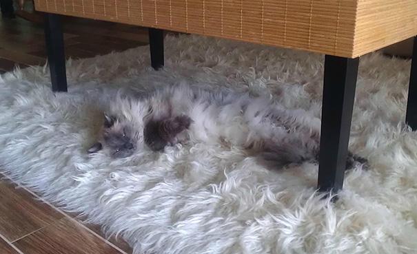 Gatos camuflados de una forma perfecta (17)