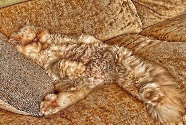 Gatos camuflados de una forma perfecta (19)