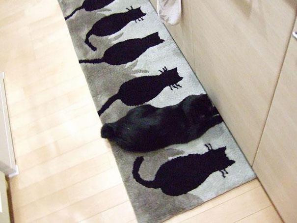 Gatos camuflados de una forma perfecta (20)