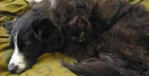 Gatos camuflados de una forma perfecta (27)