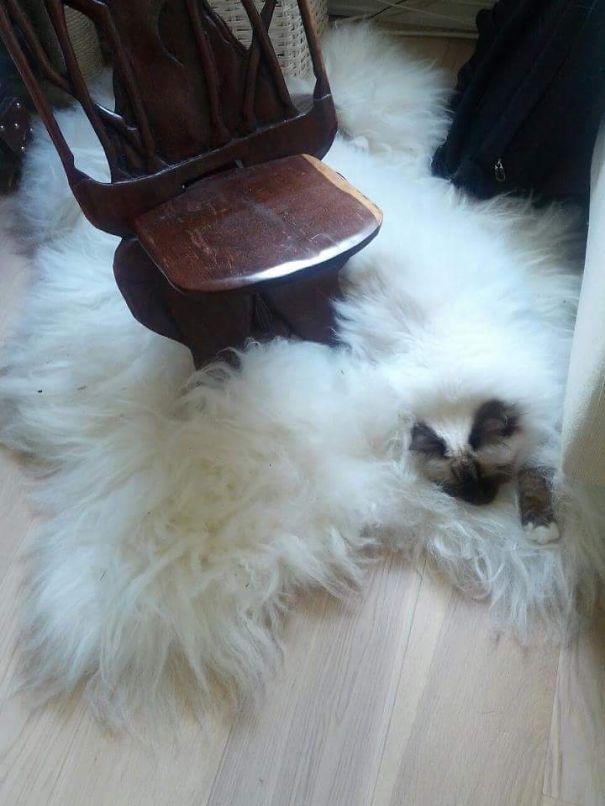 Gatos camuflados de una forma perfecta (3)
