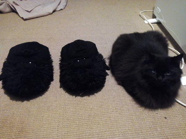 Gatos camuflados de una forma perfecta (30)