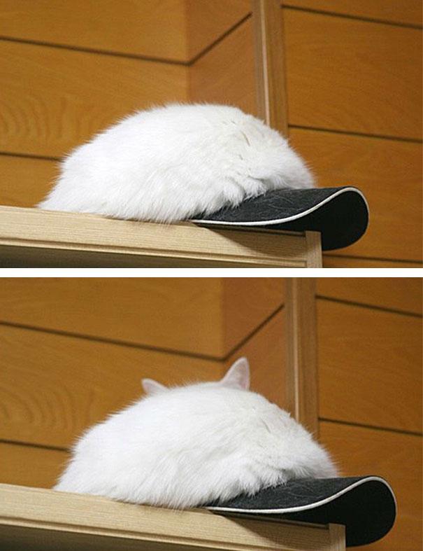 Gatos camuflados de una forma perfecta (7)