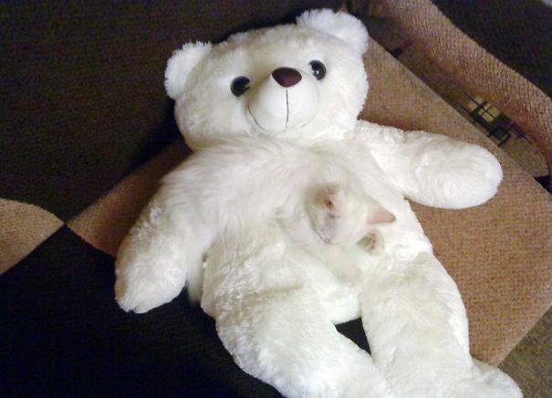 Gatos camuflados de una forma perfecta (9)
