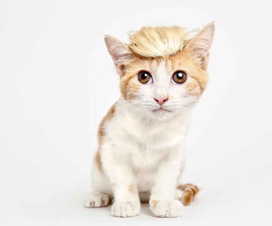 adorables-gatitos-con-adornos-2