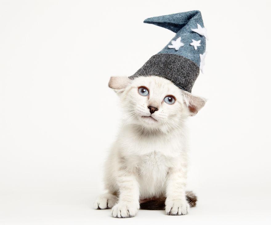 adorables-gatitos-con-adornos-4