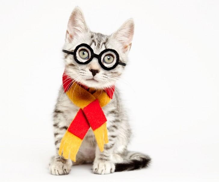 Adorables gatitos con adornos
