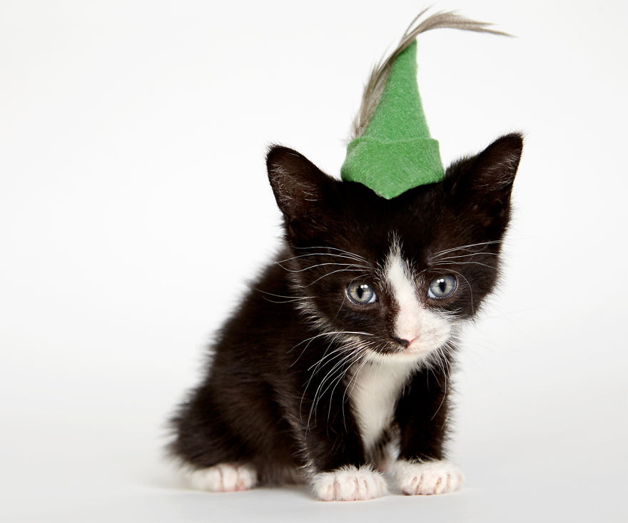 The Real Life Cat In The Hat