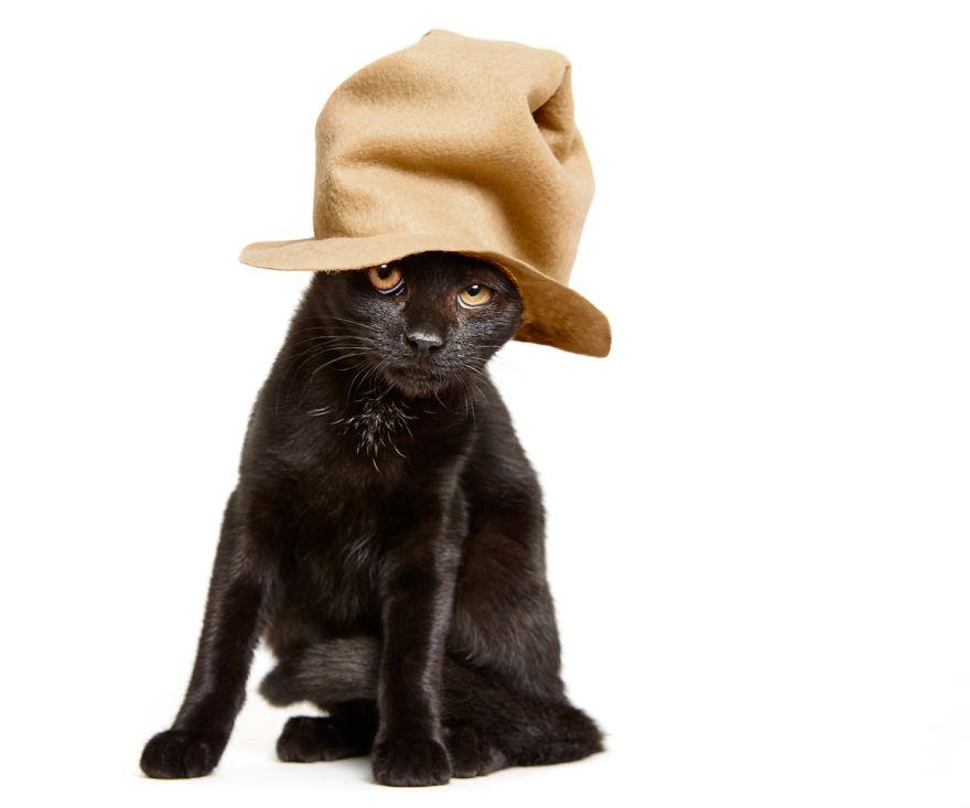 adorables-gatitos-con-adornos-7