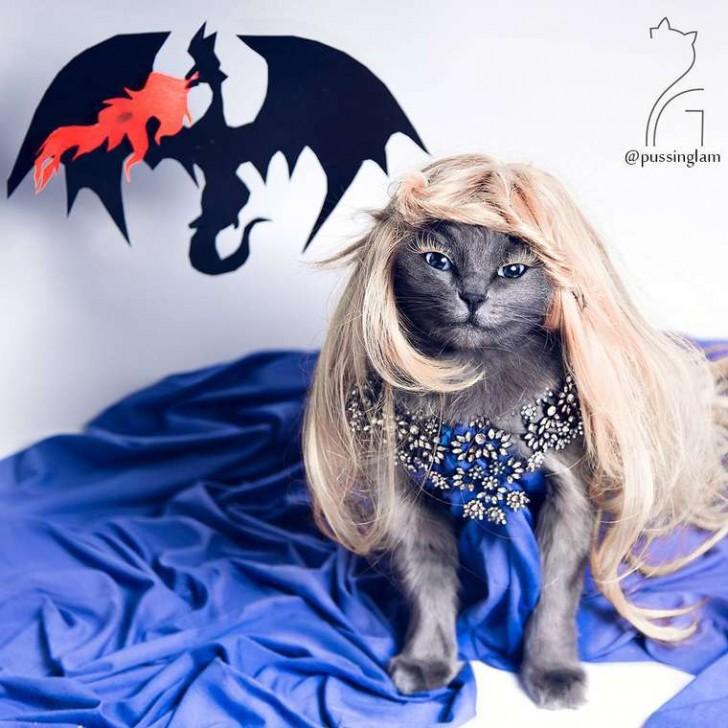 El gato con mas glamour de Instagram (10)