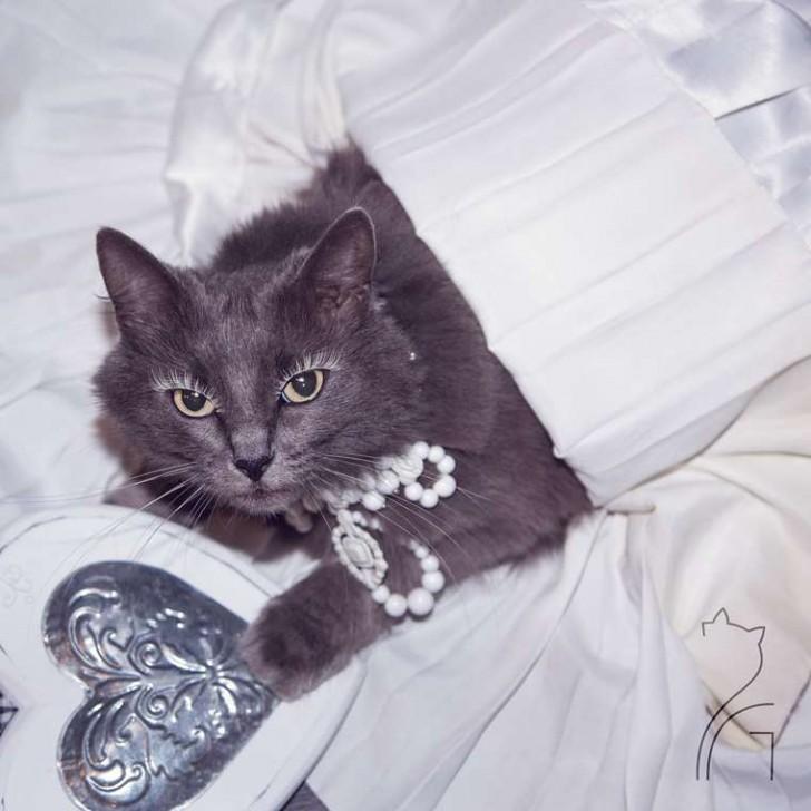 El gato con mas glamour de Instagram (11)