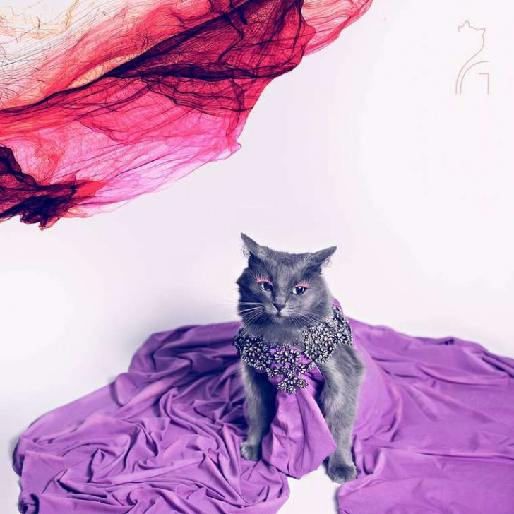 El gato con mas glamour de Instagram (12)