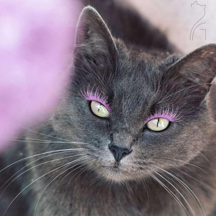 El gato con mas glamour de Instagram (13)