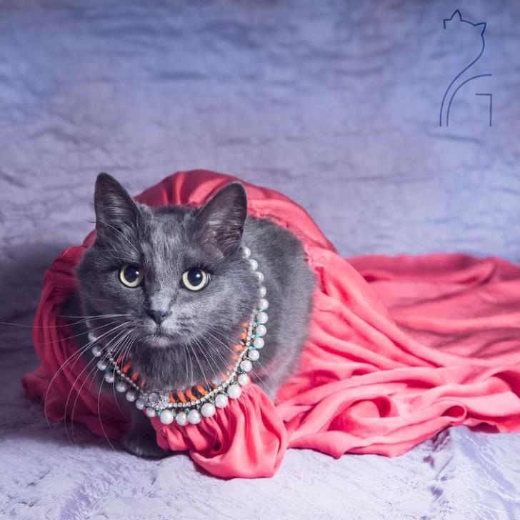 El gato con mas glamour de Instagram (16)