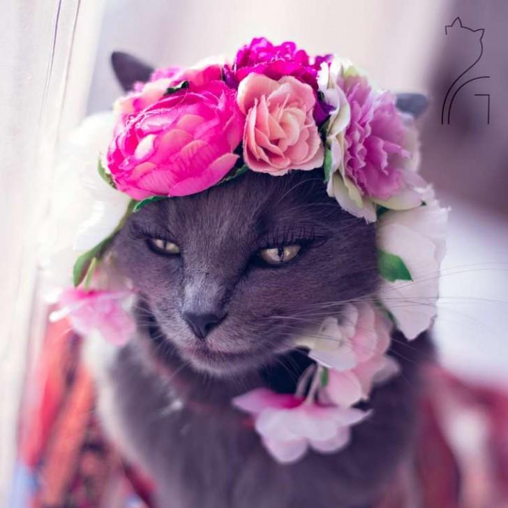 El gato con mas glamour de Instagram (2)