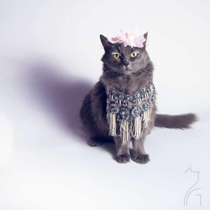 El gato con mas glamour de Instagram (3)