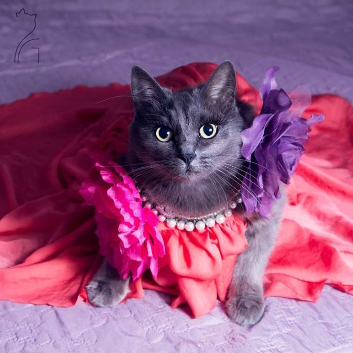El gato con mas glamour de Instagram (4)