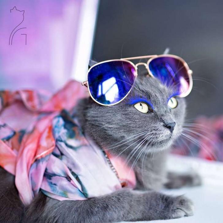 El gato con mas glamour de Instagram (5)